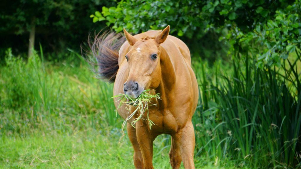 Zelfmedicatie paard